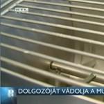Kart tépett le a tésztadagasztó Miskolcon: a tulajdonos a dolgozót hibáztatja