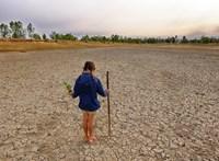 Egyre több olyan betegséget szabadít a világra a klímaváltozás, amit ember is elkaphat