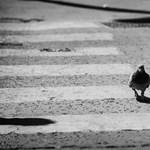 Döglött galambok az orosházi kórházban, leállították a műtéteket