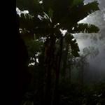 Nézze meg velünk a világ legnagyobb barlangját