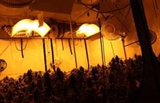 Egy 3. emeleti lakásban találtak marihuánaültetvényt a rendőrök az Etele úton