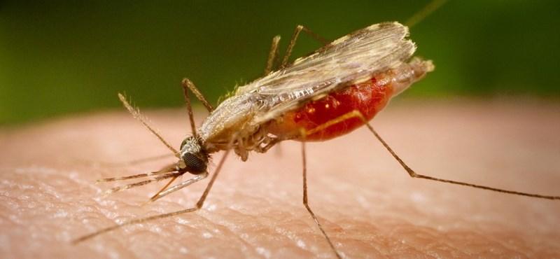 A mesterséges intelligencia által vezérelt lézerrel irtaná a szúnyogokat egy orosz feltaláló