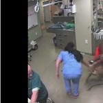 Egy kutya megvalósította az állatorvosok rémálmát – videó