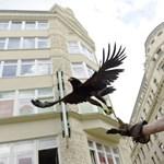 Ölyvvel hoznak frászt a Váci utcai galambokra – fotók