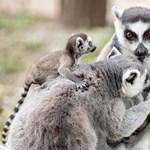 A győri állatkertből jött ismét a napi cuki – fotók