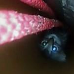 Ilyen izgalmas macskamentős videót rég nem látott