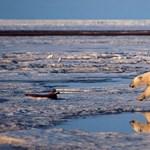 Medvetámadás érte a Jeges-tengeren dolgozó meteorológusokat