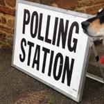 Hősiesen várakoznak a kutyák a brit szavazóköröknél