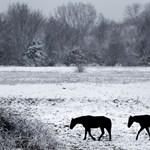 Elkóborolt lovakat keresnek a Bükkben