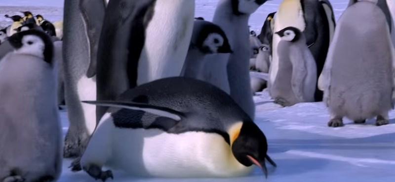 Találtak másfél millió pingvint