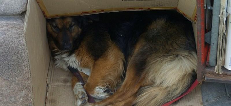 Elpusztíthatják a kóbor kutyákat Romániában