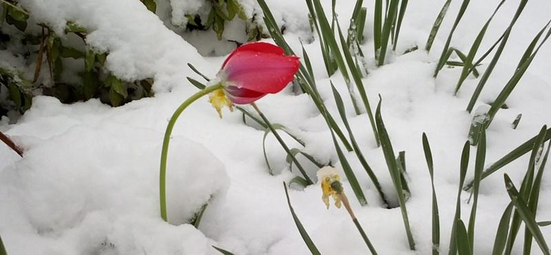 Folytatódik a téli tavasz, zivatarok is lehetnek