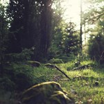 Hajdú-Bihar megyényi erdőt telepítene Áder, most még messze vagyunk ettől