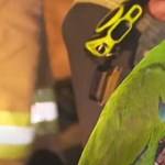 Kigyulladt egy ausztrál férfi lakása, a papagája addig kiabálta a nevét, amíg felébredt