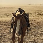 Liam Neeson és Tom Waits is odacsap a legújabb Coen-westernben