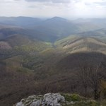 Az állami erdőkezelő üzeni: csak fiatalítás miatt vágták ki a 180 éves erdőt