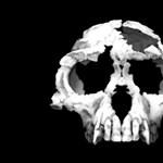 Kétségek a korai hominidával kapcsolatban