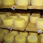Cukorbaj megelőzésére is jó a sajt