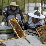 Betiltatnák a méheket tizedelő vegyszert