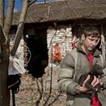 Több tucat éhező kutyát találtak egy tanyán - fotók