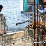 Program a bejgli mellé: nézegesse az év legjobb állatos képeit