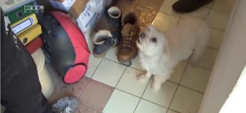 A kiskutya mentette meg a hódmezővásárhelyi család életét