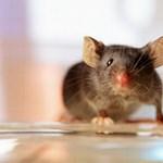 Vetkőzés helyett egerekkel szagoltatnak majd a reptéren? - videó