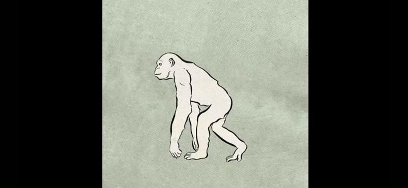 Szenzációs marokkói leletek írhatják újra az evolúció történetét