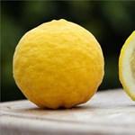 C-vitaminnal küzdhetünk a változó időjárás ellen