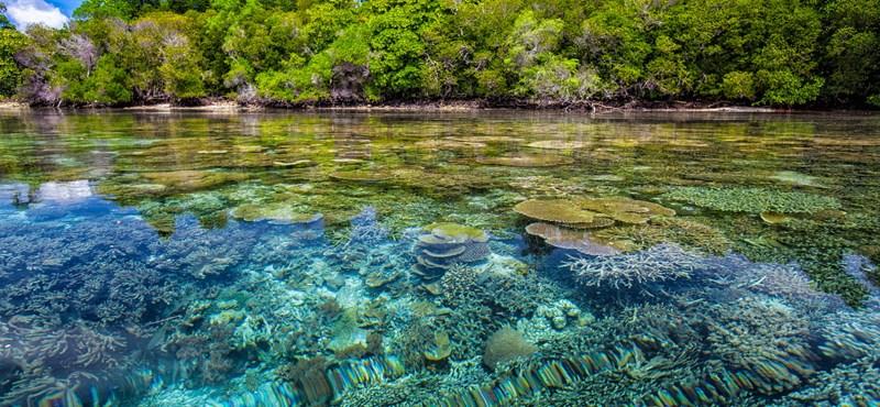 Találtak 12 növényfajt, melyek segíthetnek helyrehozni a korallszigeteket