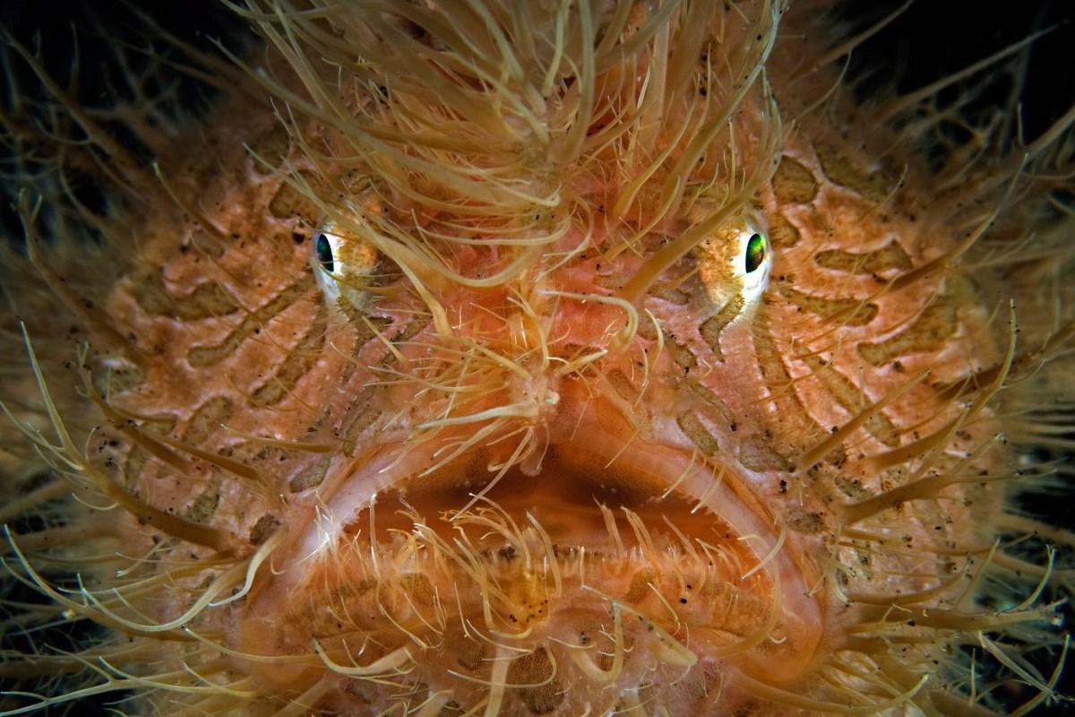 Szépségek és rémségek a víz alatt - Nagyítás-fotógaléria