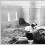 Magyarországról indulnak a csempészett kutyakölyök-szállítmányok - videó