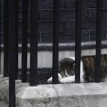 Larry macska okozott fejtörést Trump embereinek Londonban - fotó