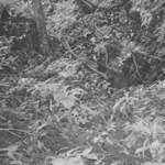 15 éve nem látott emlőst fényképeztek le - fotó