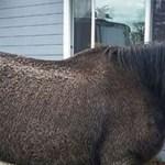 Kidobta az amerikai bíróság a ló feljelentését