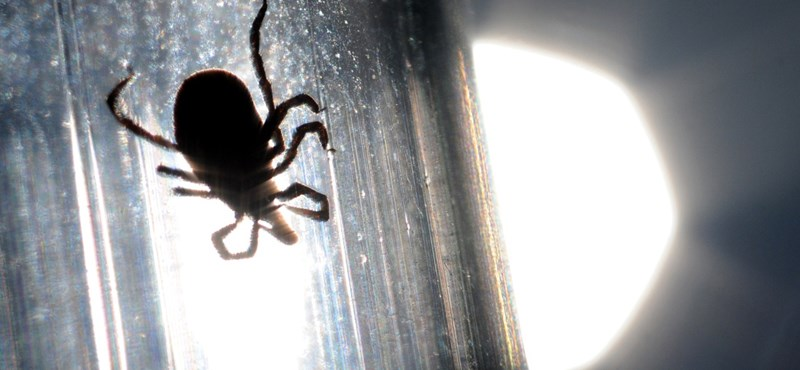Klímaváltozás nélkül ma háromból két embernek nem lenne Lyme-kórja