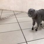 Titániumból készült mancsokat kapott egy hóban összefagyott macska