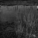 Eltűnt az élet a fukusimai erőmű közeléből – Nagyítás-fotógaléria