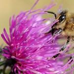 A Greenpeace itthon is leszámolna a méhgyilkos vegyszerekkel