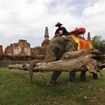 Ormányos segítség a thaiföldi árvízkárok eltüntetéséhez