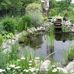 Telek és otthon: a kerti tó építése