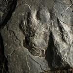 Fotók: Dinólábnyomokat találtak egy népszerű túraútvonal kövein Amerikában
