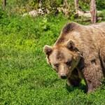 Játékos medvehajszát hirdettek Füzéren