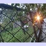220 voltot vezetett a kerítésbe, pedig 10 éves gyerek volt a szomszédja