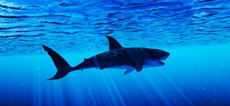 Két nap alatt három cápatámadás történt egy floridai strandon