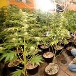 Országos droghálózatot számolt fel a rendőrség
