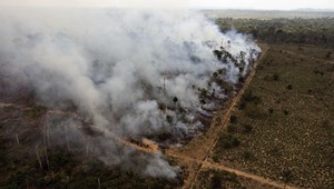A brazil szója és marhahús ötöde erdőirtás után kerül Európába