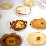 Hulladékon hizlalt gombákkal váltanák ki a műanyagalapú hőszigeteléseket