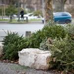 Kidobott karácsonyfákból készítenek üdítőt Észtországban
