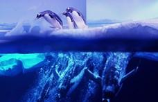 Karácsonyi filmeket néznek a londoni akvárium pingvinjei